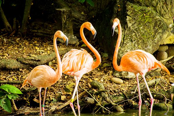 flamingo-piscilago-colsubsidio-1