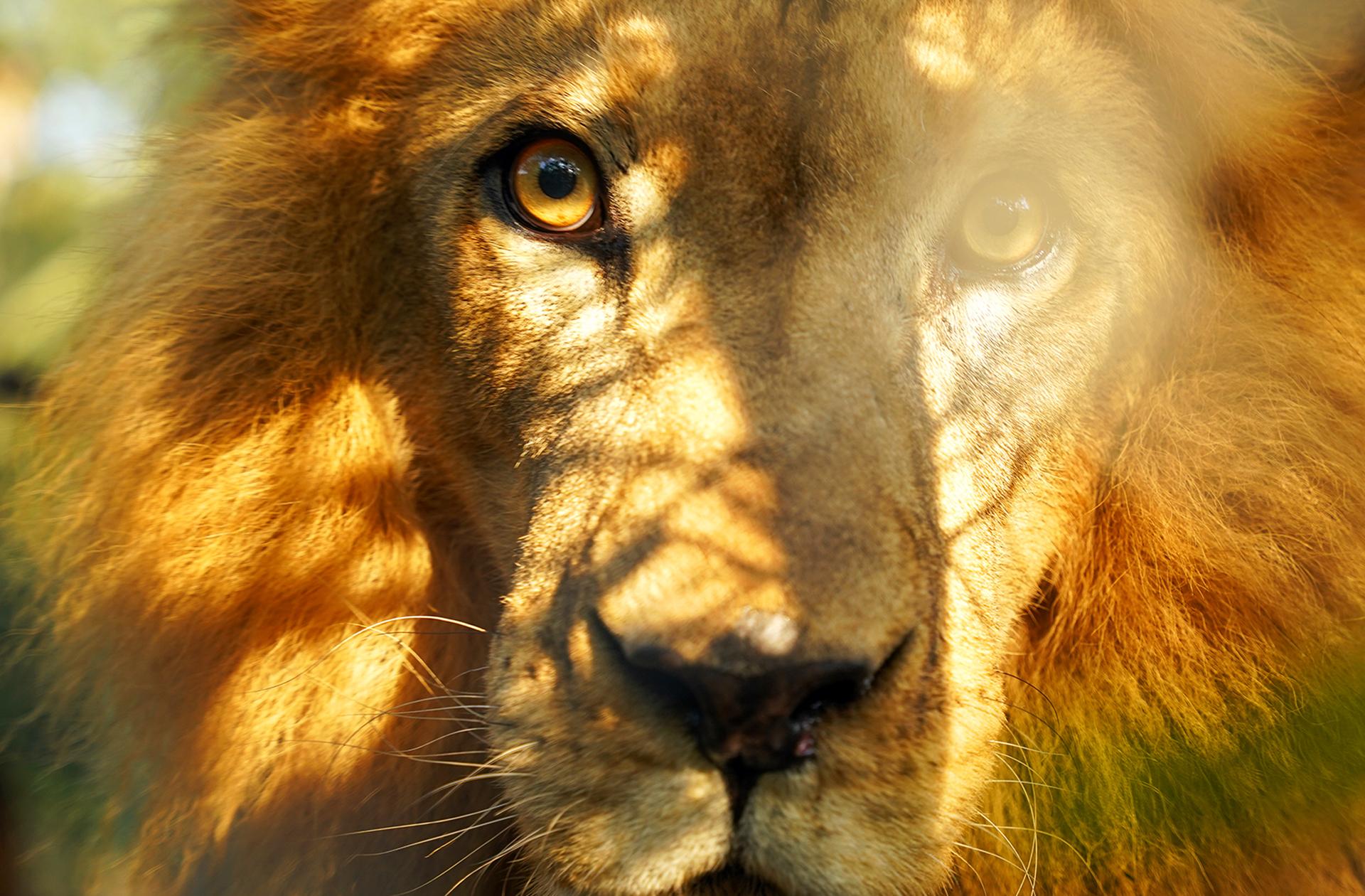 leon-piscilago-colsubsidio-6