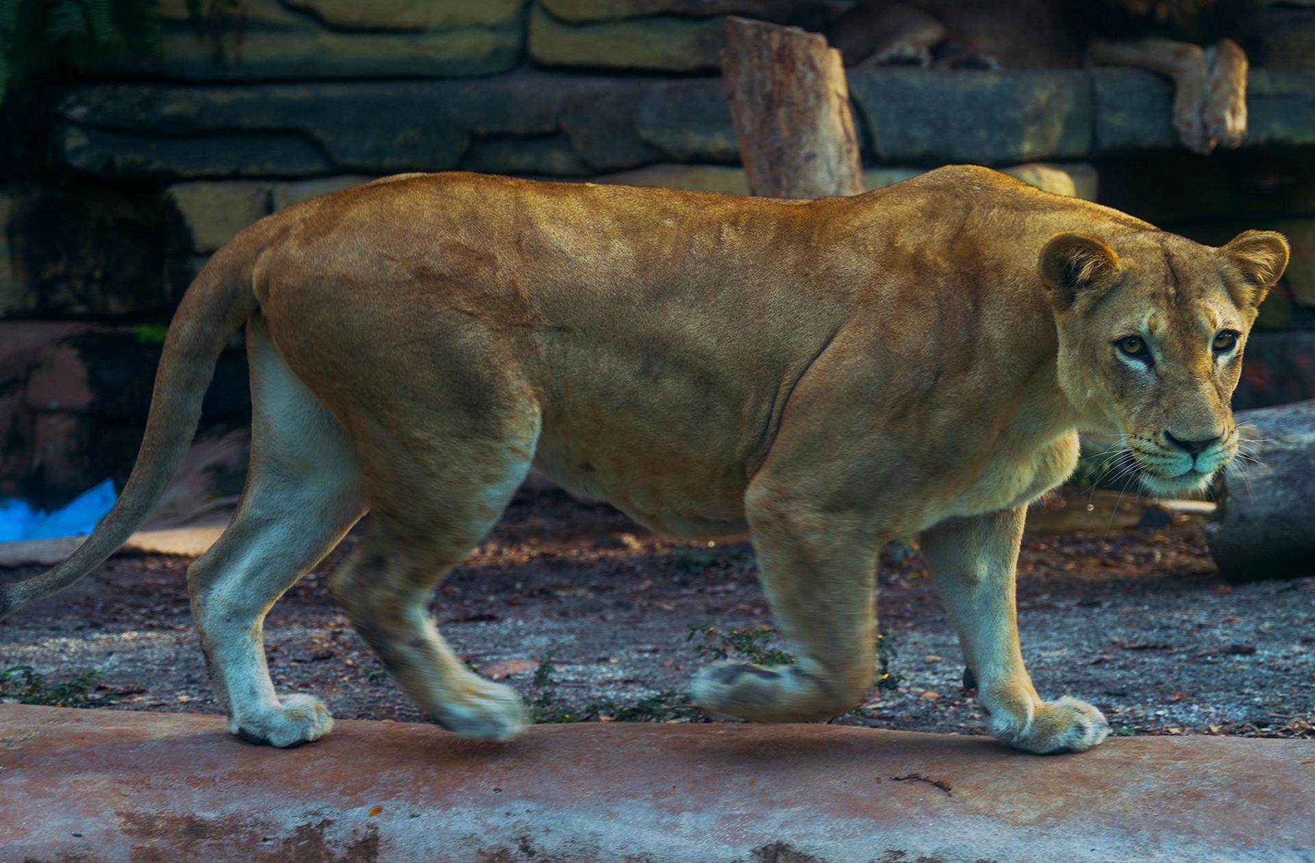 leona-piscilago-colsubsidio-1