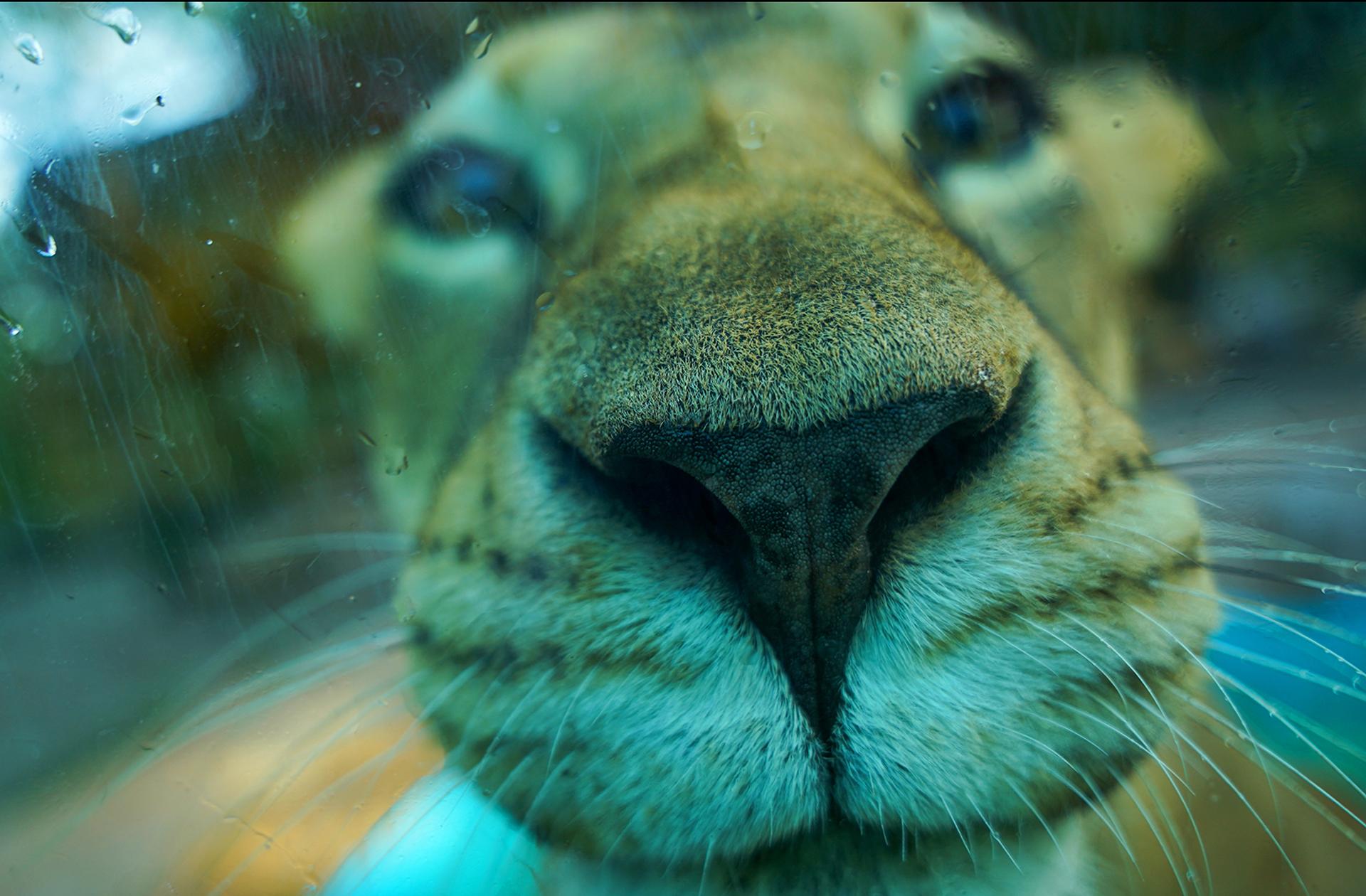 leona-piscilago-colsubsidio-4