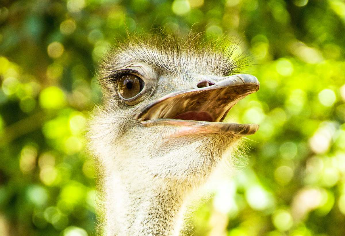 avestruces-piscilago-colsubsidio-3_1200X820
