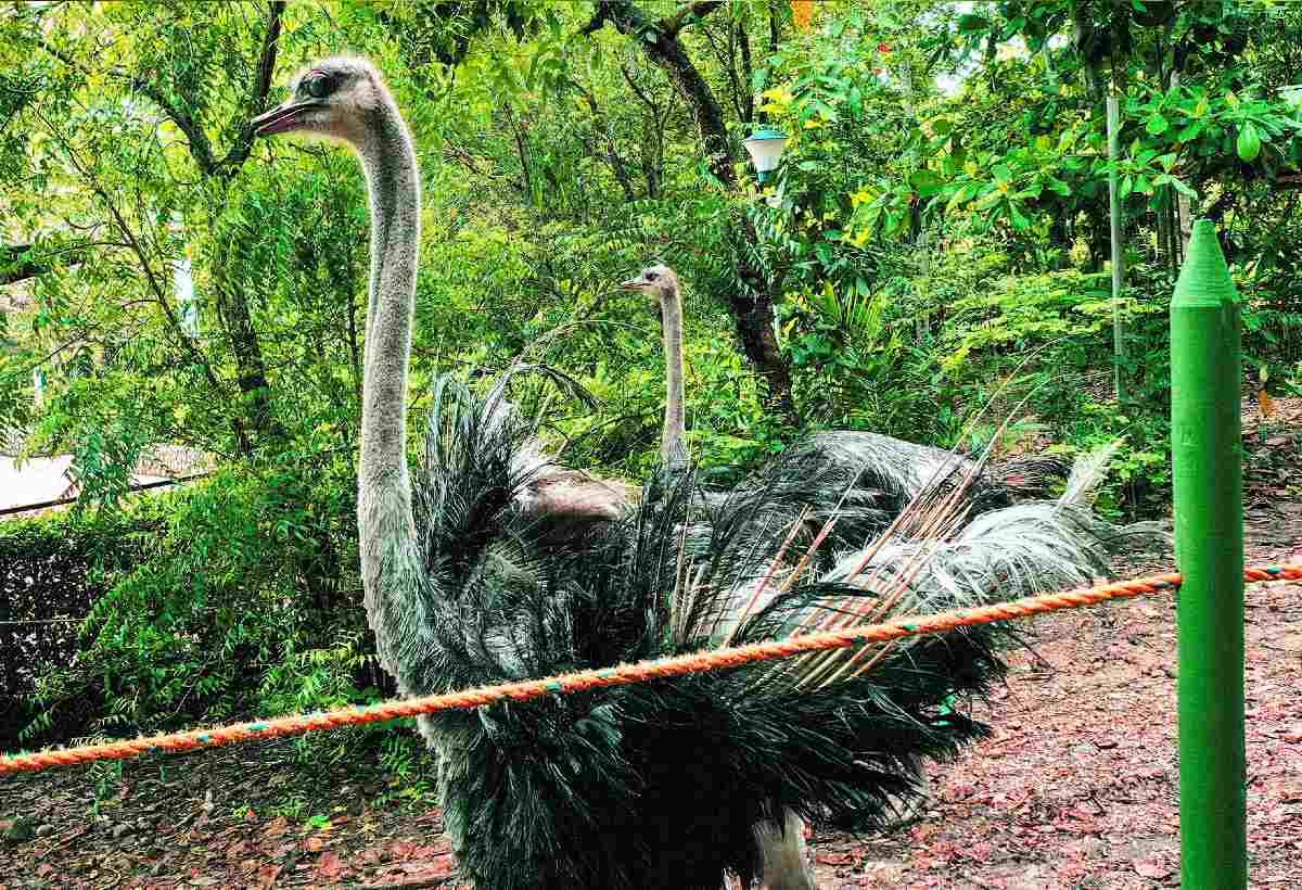 avestruces-piscilago-colsubsidio-5_1200X820