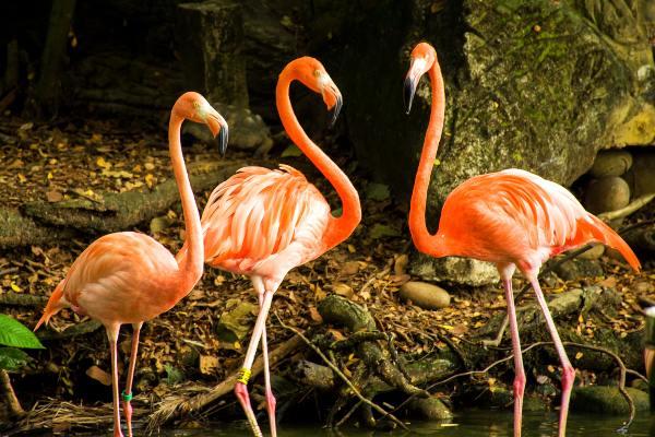 flamingo-piscilago-colsubsidio-1_600X400