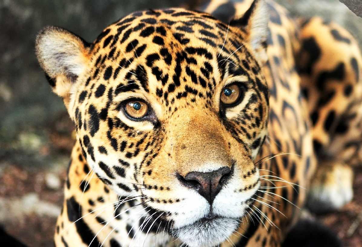 jaguar_piscilago_colsubsidio_1_1200x820